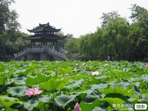 【3月】青岛出发到〓华东五市南京无锡苏州杭州南浔木渎西塘乌镇线路总汇