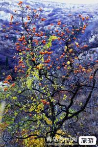 【3月】正华石佛山+草莓采摘+植树+惊险滑草+特色植物园+农耕展馆一日游