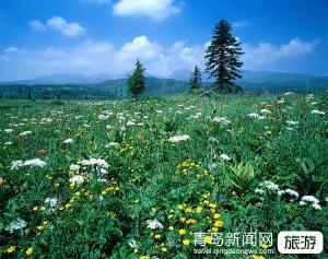 【4月】【恋恋夕阳】东北旅游.长春、长白山、镜泊湖、哈尔滨双飞五日游