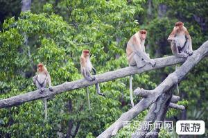 【五一】 威海刘公岛、西霞口野生动物园、隆霞湖二日游