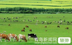 【6月】张家口、内蒙古锡林郭勒草原大巴五日游(有自费)