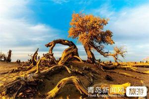 【9月】印象额济纳-内蒙古呼和浩特额济纳黑水城怪树林胡杨林双飞6日摄影品质游