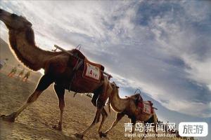 【9月】【山东成团】西北环线-塔尔寺互助张掖嘉峪关敦煌双飞一卧一动7日游