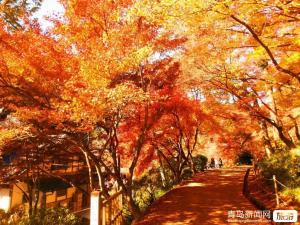 【10月】临朐官护山红叶谷+青州古城+青州特色全素自助宴一日游