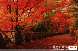 【11月】【乐游连云港】连云港、4A孔望山、4A桃花涧、伊甸园大巴2日游