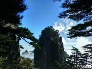 【春节】青岛成团.黄山、千岛湖、屯溪老街、黎阳水街、双飞4日游