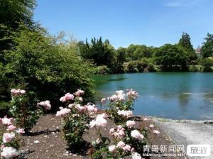 【3月】【高原红】—云南、青岛直飞大理 丽江 香格里拉 双飞6日游