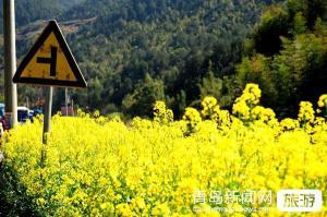【3月】兴化油菜花、泰州老街、扬州何园、东关街二日游