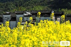 【3月】兴化油菜花、泰州老街、溱湖湿地二日游