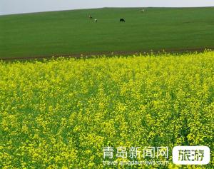 【3月】【好摄之途】江西、庐山、景德镇、婺源、三清山双飞五日游