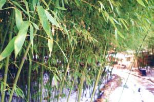 【清明节】青岛森林野生动物园、草莓采摘一日游