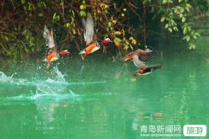 【7月】日照挑战玻璃栈道+玻璃滑道赛龙舟海鲜大咖激战鳄鱼岛一日游