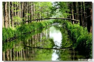 【76月】李中水上森林公园、泰州老街、扬州何园、瘦西湖、大明寺二日游